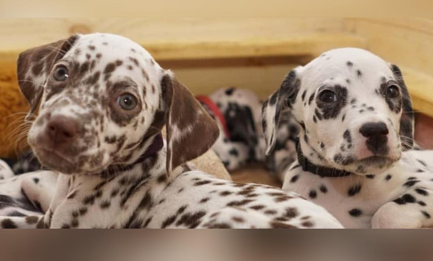 Strahlentherapie für Tiere
