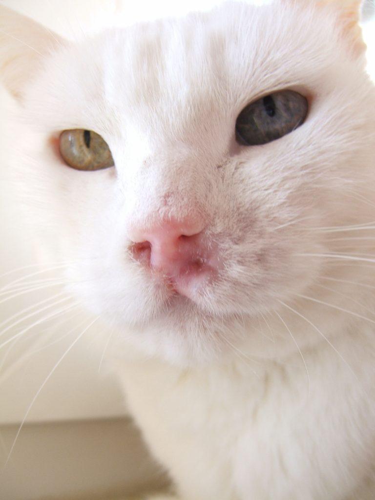 Chemotherapie Katze